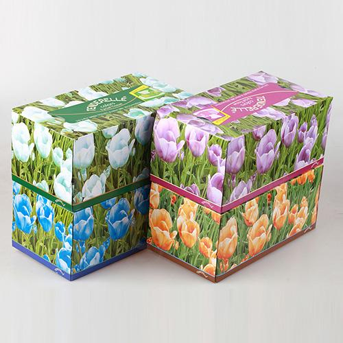 4 color box facial tissue